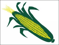 Sweet Corn (Item# P26CORN)